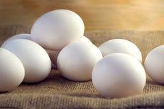 Kippen witte eieren Stock Foto's