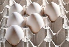 Kippen witte eieren in een cassette Royalty-vrije Stock Afbeelding