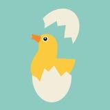 Kippenbroedsels van het ei Royalty-vrije Stock Fotografie
