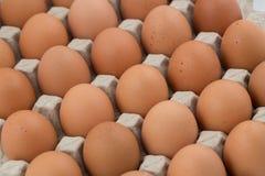 Kippeneieren Stock Foto's