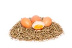 Kippeneieren in een nest op witte achtergrond Stock Foto