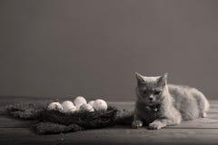 Kippeneieren en een kat Royalty-vrije Stock Afbeelding