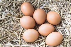 Kippeneieren op een nest van hooi in zijn natuurlijke vorm Royalty-vrije Stock Foto's
