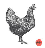 Kippenhand getrokken illustratie Kippenvlees en van de eieren uitstekende opbrengst elementen royalty-vrije illustratie