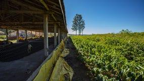 Kippenloodsen en koffieaanplanting op een klein bezit stock fotografie