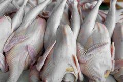 Kippenorganismen op de markt Royalty-vrije Stock Fotografie