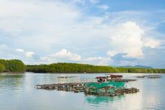 Kippenrenvissen van het overzees van Thailand Royalty-vrije Stock Fotografie