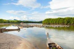 Kippenrenvissen van het overzees van Thailand Royalty-vrije Stock Afbeeldingen