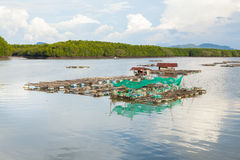 Kippenrenvissen van het overzees van Thailand Royalty-vrije Stock Afbeelding