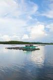 Kippenrenvissen van het overzees van Thailand Stock Afbeelding