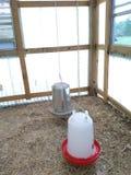 Kippenvoeder & Water in de Kippenren Stock Afbeelding