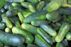 Kirby Cucumbers Stock Images