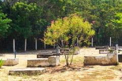 Kirchhof auf Insel Ilha groß, Brasilien stockfotos