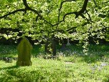 Kirchhof im grünen Licht mit Bäumen und Blättern stockfotografie
