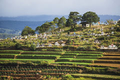 Kirchhof von Vietnam Stockfoto