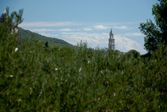 Kirchturm über Olivenbäumen in Kroatien Lizenzfreies Stockfoto