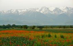 Kirgistan-Mohnblumefeld Stockfoto