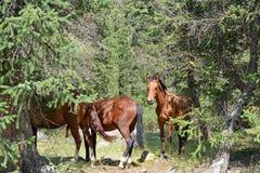 Kirgistan natura, Gregory wąwóz Zdjęcie Royalty Free