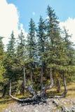 Kirgistan natura, Gregory wąwóz Obrazy Stock