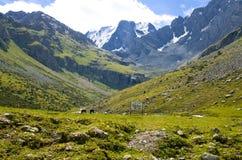 Kirgizstan - góra i konie fotografia royalty free
