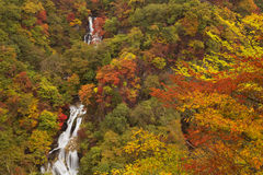 Kirifuri Falls near Nikko, Japan in autumn Royalty Free Stock Image