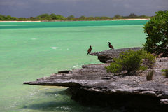 Kiritimati lagoon coastline. Royalty Free Stock Image