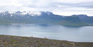 Kirkjufell och Grundarfjörður Royaltyfri Fotografi