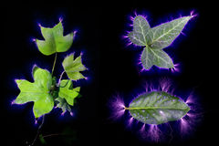 Electric current passed through three different types of leaf. Kirlian effect of electric current passed through three different types of leaves Stock Photography