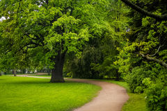 Kirov central park with old oak and curved road Stock Photos