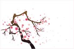 Kirsch- oder Pflaumeblütenmuster Stockbilder