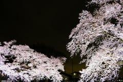 Kirschbäume leuchteten entlang Nogawa-Fluss, Sazumachi, Chofu-shi, Tokyo, Japan im Frühjahr Lizenzfreies Stockfoto