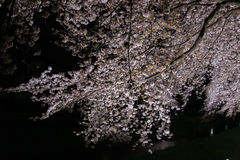 Kirschbäume leuchteten entlang Nogawa-Fluss, Sazumachi, Chofu-shi, Tokyo, Japan im Frühjahr Lizenzfreie Stockfotografie