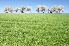 Kirschbäume und Felder Lizenzfreie Stockfotografie