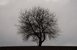 Kirschbaum auf den Gebieten Stockfotos