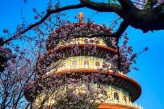 Kirschbaum in der Blüte Stockfotografie