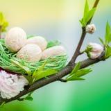 Kirschbaum mit grünem Nest und Eiern Lizenzfreie Stockfotografie