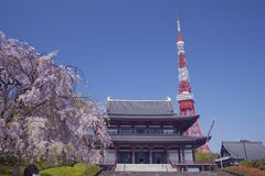 Kirschbaum, Tempel und Tokyo-Kontrollturm Lizenzfreies Stockfoto