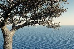 Kirschbaum und Meer Lizenzfreies Stockfoto