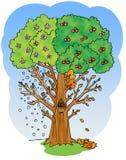 Kirschbaumillustration mit vier Jahreszeiten Lizenzfreie Stockfotos