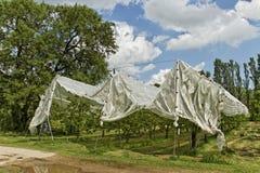 Kirschbaumschutz Stockfoto