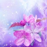 Kirschblüte Lizenzfreie Stockfotografie