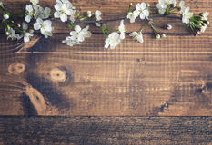 Kirschblüte auf hölzernem Hintergrund Stockfoto