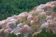 Kirschblüte auf Yoshinoyama, Frühlingslandschaft Naras, Japan lizenzfreie stockfotos