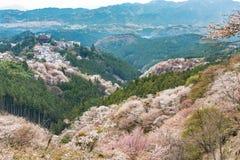 Kirschblüte auf Yoshinoyama, Frühlingslandschaft Naras, Japan Lizenzfreie Stockbilder