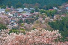 Kirschblüte auf Yoshinoyama, Frühlingslandschaft Naras, Japan Lizenzfreies Stockfoto