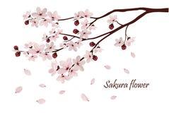 Kirschblüte blüht Vektorillustration n Stockfoto