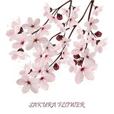 Kirschblüte blüht Vektorillustration n Stockfotos