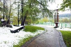 Kirschblüte-Blumen im Schnee lizenzfreie stockbilder