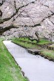 Kirschblüte-Blumenblätter, die im Frühjahr Shingashi-Fluss, Kawagoe, Saitama, Japan bedecken Lizenzfreies Stockbild
