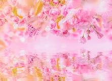 Kirschblüte-Blumenkirschblüte, Wasserreflexion, Licht Grußkarten-Hintergrundschablone Flache Tiefe Weiche getont blühender Baum stockbilder
